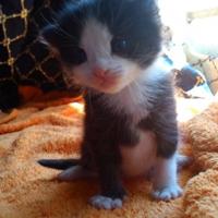 可爱喵星人 汪星人头像 可爱猫咪头像大全送给萌友们